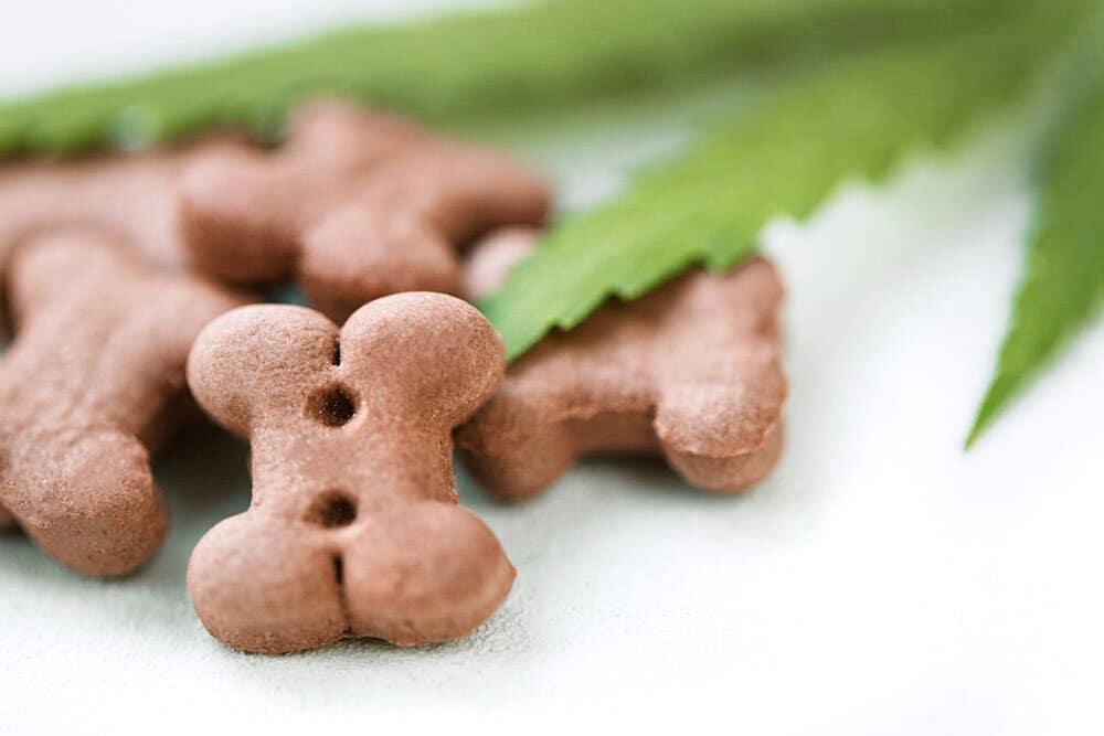 Bone shaped, brown, dog treats and marijuana leaf on white table